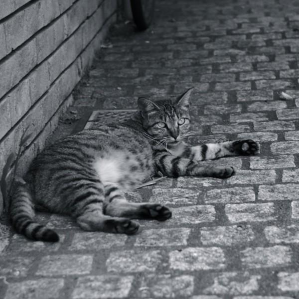 粋な街「神楽坂」・・・神楽坂と猫の不思議な関係