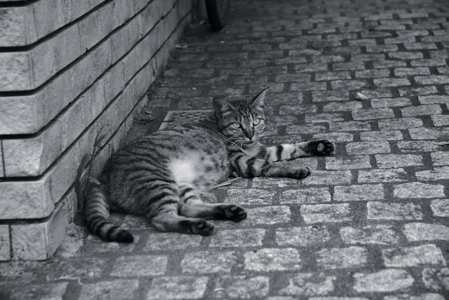 神楽坂と猫の不思議な関係