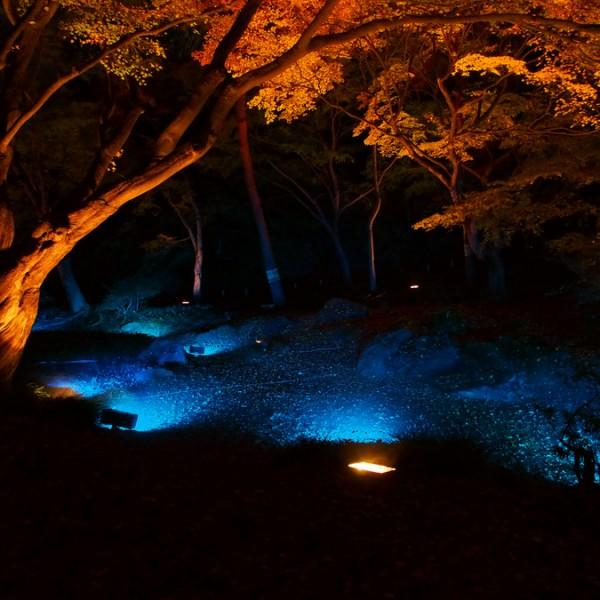 歴史と自然の美しさに魅了される! 東京で「粋」な散歩デートを楽しめる庭園BEST3!