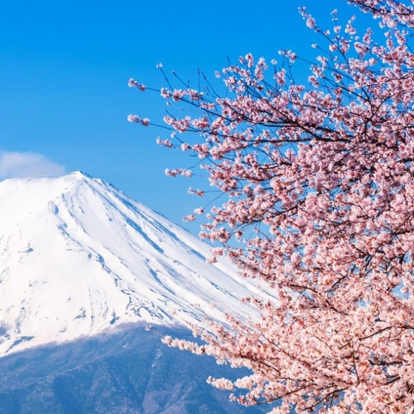なぜ日本人がこれほどまでに『桜』を愛でるのか?…見聞を広げ、花見が3倍楽しくなる『桜』雑学集