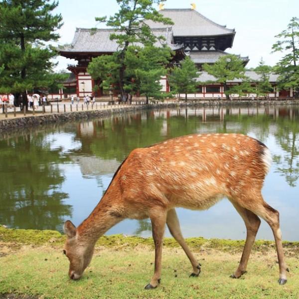 """心身を休める旅…古都・奈良を""""贅沢""""に楽しむために必要な3つのコツ。"""