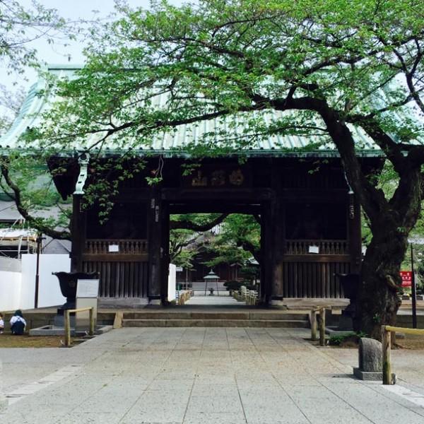 都会の狭間、心の拠り所。 祐天寺で過ごす、穏やかな散歩デートの時間。