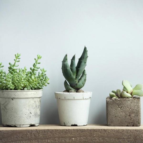 植物と共にある暮らしを。 お洒落空間が広がる、オススメのグリーンショップ 3選。