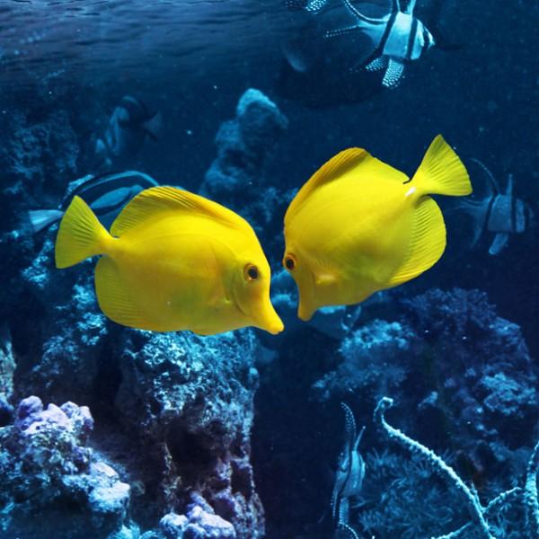 ロマンティックなデートを! …熱帯魚と食事で非日常を楽しむ都内アクアリウム・レストラン 3選。