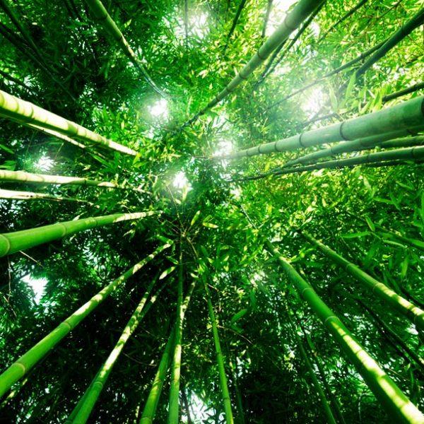 心の拠り所に浸る… 全国各地の竹林スポットで過ごす、極上の一人時間。