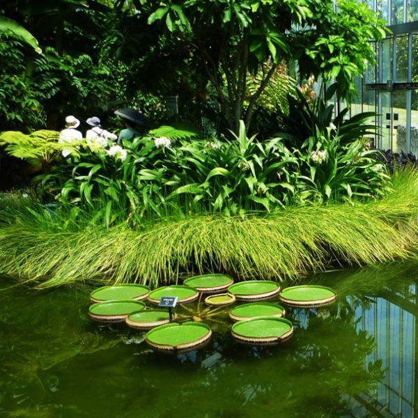 ここは本当に日本か?ディープな熱帯植物の世界へ…新宿御苑 大温室に冒険。