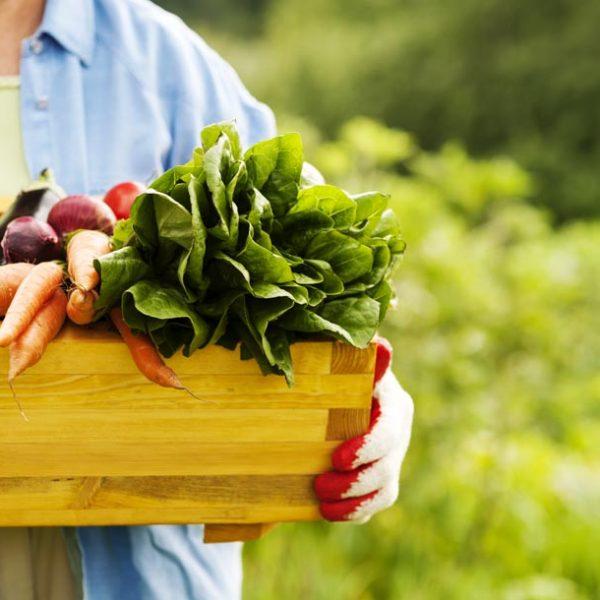 """肉食も""""植物""""男子を目指そう! 初心者でも気軽に始められる家庭菜園のすゝめ。"""
