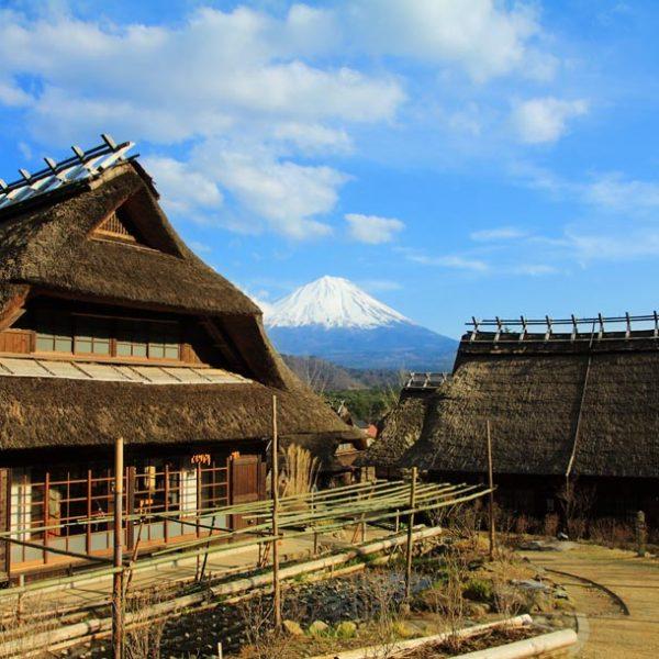 """土地、風土がつくる旨味から日本を知る?!… 日本人として知っておきたい""""伝統野菜"""""""