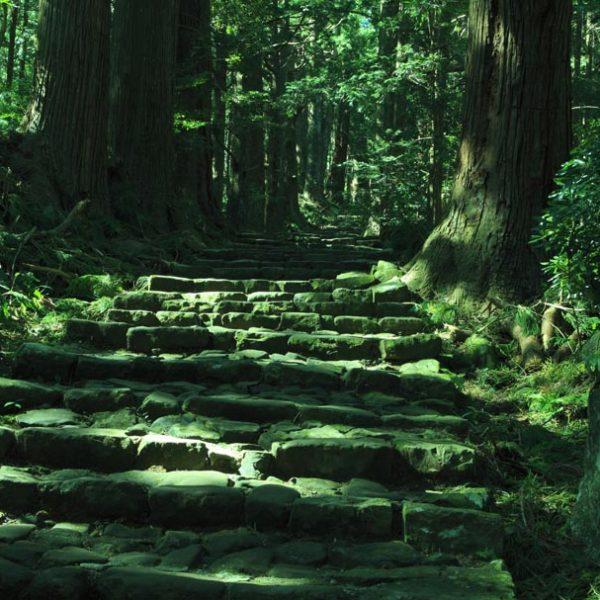 古人・神霊の息遣いを肌で感じる…世界遺産「熊野古道」へ