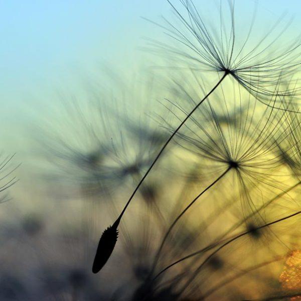 子孫繁栄のために旅に出る種子達の世界を垣間見る