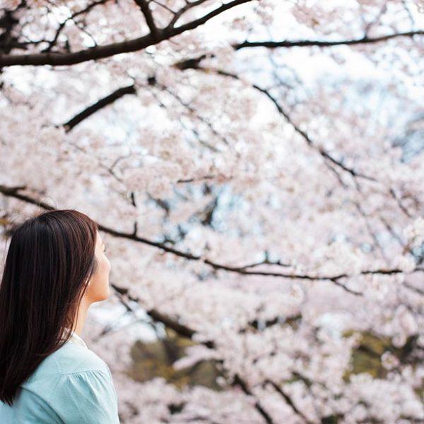 ソメイヨシノだけじゃない!桜の種類を知り、今年のお花見を楽しむ。